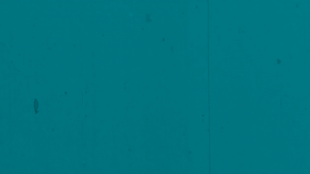 graphic image with white text reads ' faded silver' on a teal background.