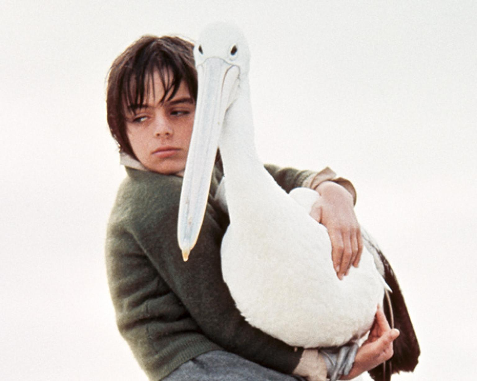 Greg Rowe as Storm Boy holds Mr Percival the pelican as they sit on a boat together. Greg looks very sad.