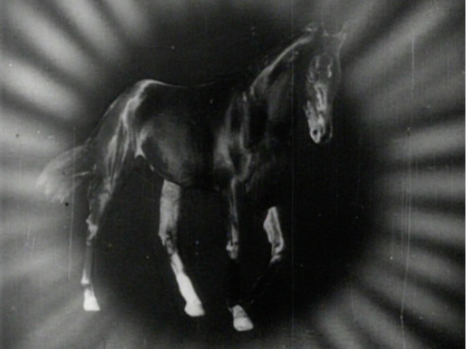 A graphic of dead horse Phar Lap surrounded by light. Created for a newsreel about his death.