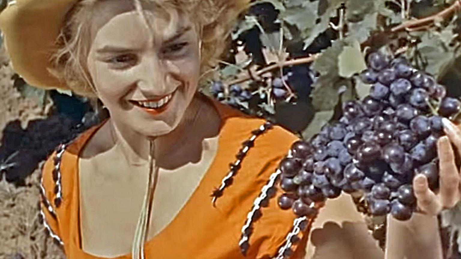 Woman in a vineyard holds up a bunch of grapes that she has just picked.