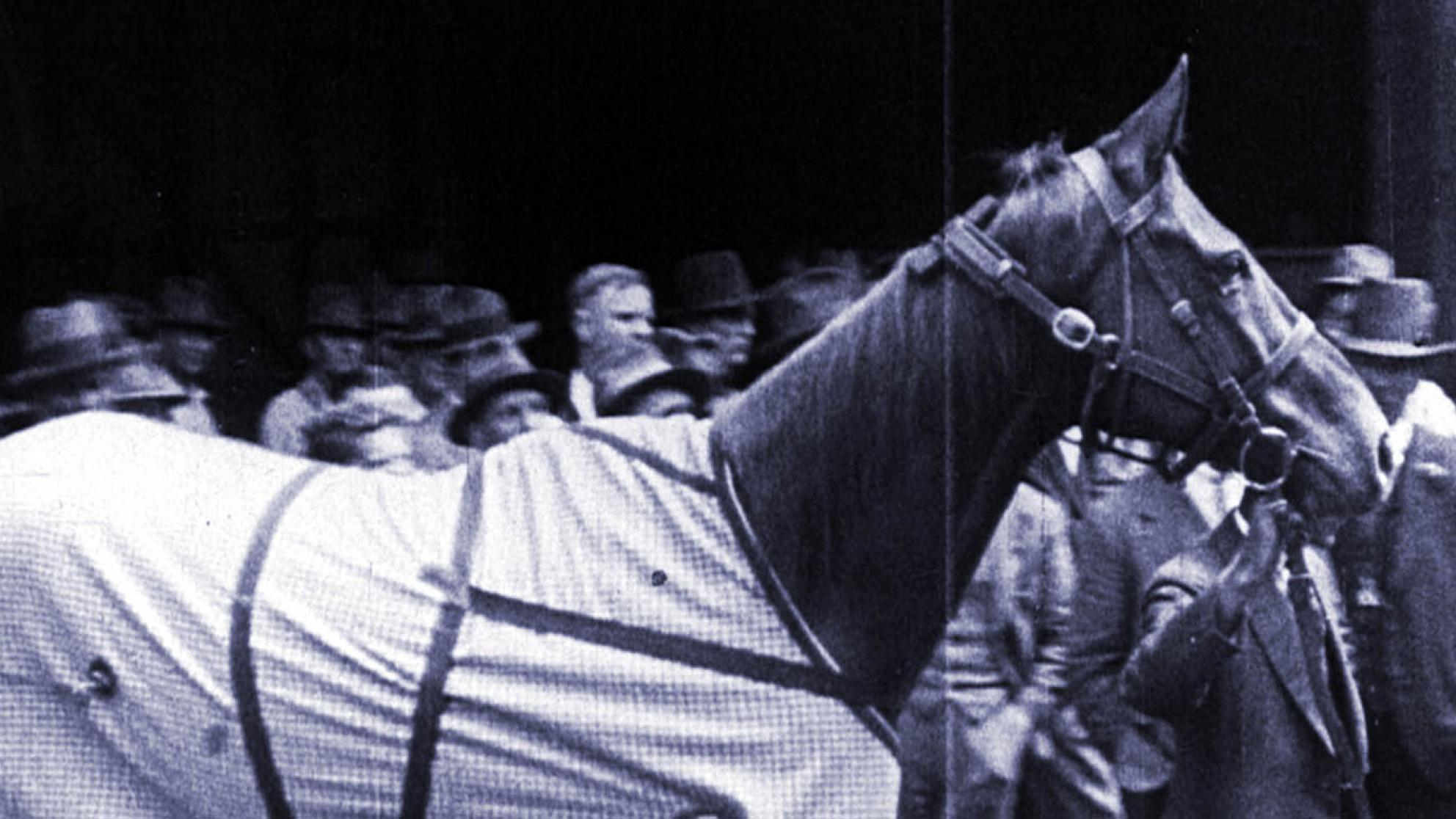 Horse Phar Lap is being led somewhere in a crowd of men in hats. He is wearing a horse rug around his middle.